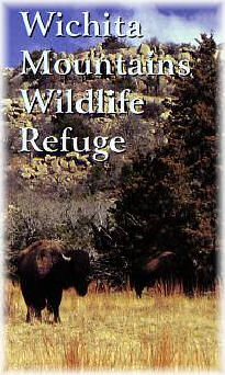 Image of Wichita Mountains Wildlife Refuge showing bison foraging.